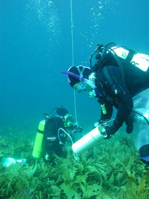 Students from The University of Adelaide researching the ecology of kelp forests