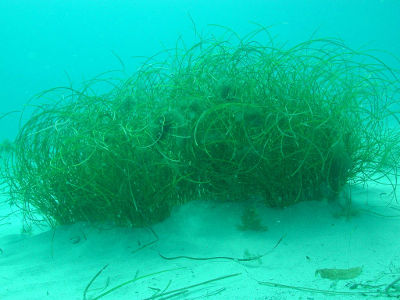 Seagrasses turn sand barrens into productive habitat for fish and their food